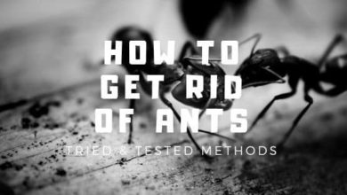 Photo of How To Get Rid Of Ants? Tried And Tested Methods Which Works